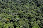 Rainforest in Borneo -- sabah_aerial_0374