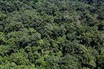 Rainforest in Borneo -- sabah_aerial_0375