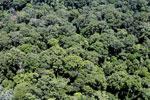 Rainforest in Borneo -- sabah_aerial_0376
