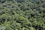 Rainforest in Borneo -- sabah_aerial_0377