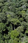 Rainforest in Borneo -- sabah_aerial_0378