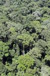 Rainforest in Borneo -- sabah_aerial_0379