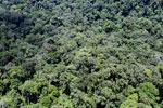 Rainforest in Borneo -- sabah_aerial_0381