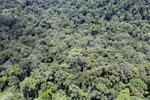 Rainforest in Borneo -- sabah_aerial_0382