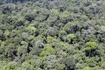 Rainforest in Borneo -- sabah_aerial_0383
