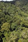 Rainforest in Borneo -- sabah_aerial_0388