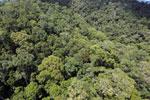 Rainforest in Borneo -- sabah_aerial_0389