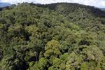 Rainforest in Borneo -- sabah_aerial_0390