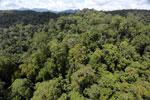 Rainforest in Borneo -- sabah_aerial_0392