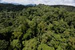 Rainforest in Borneo -- sabah_aerial_0393