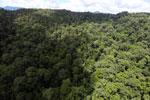 Rainforest in Borneo -- sabah_aerial_0396