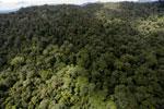 Rainforest in Borneo -- sabah_aerial_0397