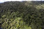 Rainforest in Borneo -- sabah_aerial_0398