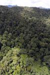 Rainforest in Borneo -- sabah_aerial_0399