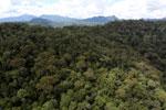 Rainforest in Borneo -- sabah_aerial_0400