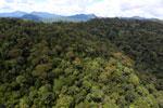 Rainforest in Borneo -- sabah_aerial_0401