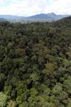 Rainforest in Borneo -- sabah_aerial_0403