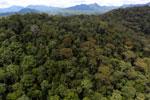 Rainforest in Borneo -- sabah_aerial_0404