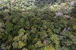Rainforest in Borneo -- sabah_aerial_0405