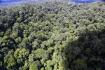 Rainforest in Borneo -- sabah_aerial_0407