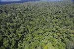 Rainforest in Borneo -- sabah_aerial_0411