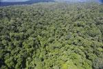 Rainforest in Borneo -- sabah_aerial_0412