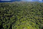 Rainforest in Borneo -- sabah_aerial_0414