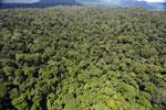 Rainforest in Borneo -- sabah_aerial_0415
