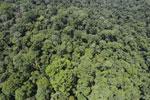 Rainforest in Borneo -- sabah_aerial_0416