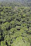 Rainforest in Borneo -- sabah_aerial_0417