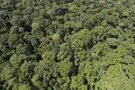 Rainforest in Borneo -- sabah_aerial_0418