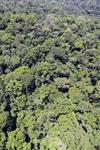Rainforest in Borneo -- sabah_aerial_0419