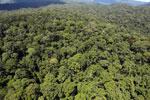 Rainforest in Borneo -- sabah_aerial_0421