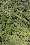 Rainforest in Borneo -- sabah_aerial_0422