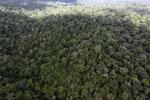 Rainforest in Borneo -- sabah_aerial_0428
