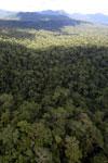 Rainforest in Borneo -- sabah_aerial_0432
