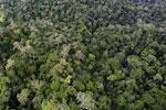 Rainforest in Borneo -- sabah_aerial_0437