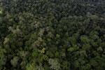 Rainforest in Borneo -- sabah_aerial_0438