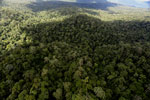 Rainforest in Borneo -- sabah_aerial_0441