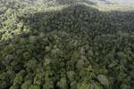 Rainforest in Borneo -- sabah_aerial_0443
