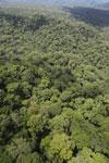 Rainforest in Borneo -- sabah_aerial_0445