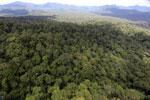Rainforest in Borneo -- sabah_aerial_0451