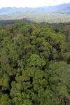 Rainforest in Borneo -- sabah_aerial_0454