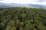 Rainforest in Borneo -- sabah_aerial_0456