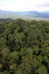 Rainforest in Borneo -- sabah_aerial_0457