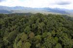 Rainforest in Borneo -- sabah_aerial_0459