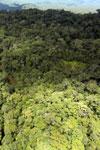 Rainforest in Borneo -- sabah_aerial_0463