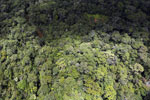 Rainforest in Borneo -- sabah_aerial_0464