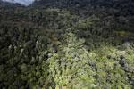 Rainforest in Borneo -- sabah_aerial_0465