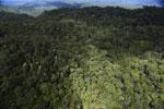 Rainforest in Borneo -- sabah_aerial_0467